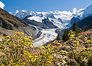"Pers Glacier flows from Piz Palü (left 3901 meters or 12,799  feet) into massive Morteratsch Glacier (Romansh: Vadret da Morteratsch) in the Bernina massif, in Upper Engadine, Switzerland, the Alps, Europe. A favorite walk is from Morteratsch (second train stop from Pontresina towards Bernina Pass) to Refuge Boval, which has a restaurant and overnight lodging. The trail is well graded, 5 or 6 miles round trip with 2700 feet gain. Return via lower trail for partial loop. The Swiss valley of Engadine translates as the ""garden of the En (or Inn) River"" (Engadin in German, Engiadina in Romansh, Engadina in Italian)."