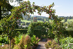 Malus domestica 'Katy' planted over an arch in the kitchen garden at Chatsworth. Other names: Apple 'Katy', Apple 'Katya', Apple 'Katja'. Bolted lettuce used as sacrificial crop to protect the rest of the bed from slugs and snails