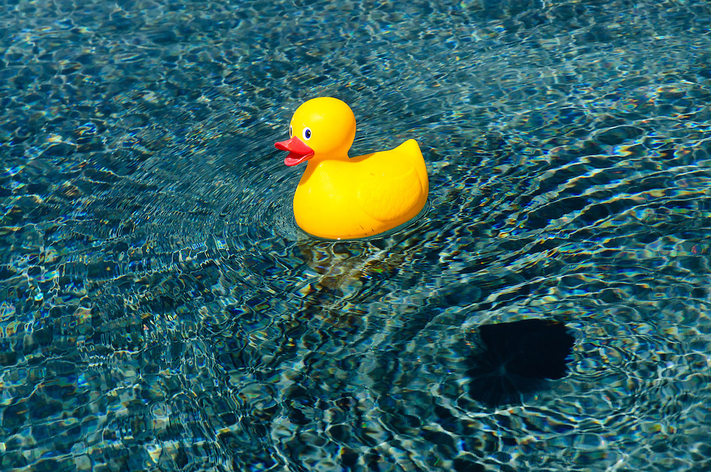 Rubber Duck, Swimming pool,  Sagaponack, NY