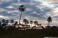 ATARDECER EN EL PARQUE NACIONAL EL PALMAR, PROV. DE ENTRE RIOS, ARGENTINA