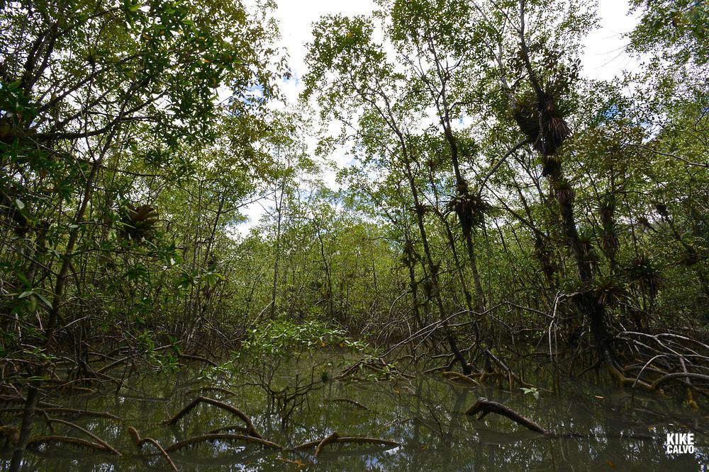 National Natural Park of Uramba,  Bahia Malaga, Colombian Pacific Coast