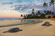 Hawaiian Green Sea Turtles on Poipu Beach in Kauai, Hawaii, USA