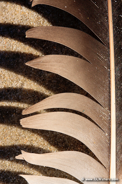 Close-up image of a feather and its shadow on Kitty Hawk beach.