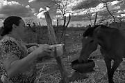 A comunidade Lagoa da Favela, fica no munic&iacute;pio de Flores, a 30 min de dist&acirc;ncia de Triunfo, no sert&atilde;o pernambucano. Vivem l&aacute; cerca de 10 fam&iacute;lias de agricultores rurais. A regi&atilde;o &eacute; denominada Sert&atilde;o do Page&uacute;, pois fica &agrave;s margens do Rio Page&uacute;. H&aacute; alguns anos os moradores vem sofrendo com a enorme seca que abateu todo o semi&aacute;rido nordestino e o rio que d&aacute; nome a esta macro regi&atilde;o est&aacute; seco. Nesta comunidade algumas iniciativas de planta&ccedil;&atilde;o com sementes criolas em Sistema Agroflorestais (SAFs) tem sido implantadas com o aux&iacute;lio do Centro Sabi&aacute;. <br /> Maria Gerlande Rom&atilde;o de Medeiros adotou h&aacute; cerca de 2 anos o sistema agroflorestal. Ela planta milho, feij&atilde;o, macaxeira, etc de forma intercalada, utilizando sementes criolas que come&ccedil;ou a ter acesso desde de que adotou o plantio sem agrot&oacute;xicos. No quintal, ela tem uma cisterna, um po&ccedil;o e uma barreira. Se a quantidade de &aacute;gua armazenada for suficiente nos pr&oacute;ximo anos ela pretende aumentar a produ&ccedil;&atilde;o para vender e ter uma fonte de renda a mais. Ela cria bode, porco, vaca, pato, galinha, etc