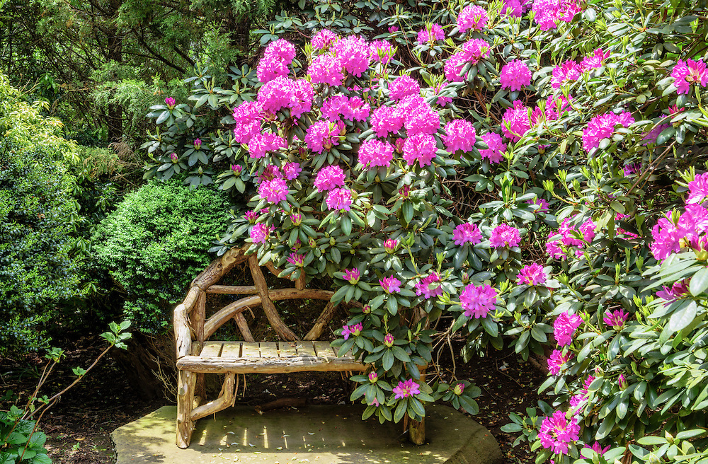 Rhododendron Path with Bench, Further Lane, East Hampton, NY