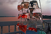 Vietnam, Hué: fishes seller.....Vietnam, Hué: fishes seller.....