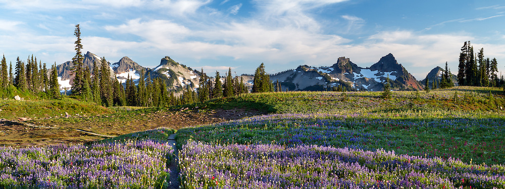 Panorama of the Tatoosh Range and the wildflowers on Mazama Ridge in Mount Rainier National Park, Washington State, USA.