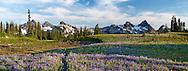 Panorama of the Tatoosh Range and the wildflowers on Mazama Ridge in Mount Rainier National Park, Washington State, USA.
