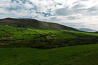 Iridescent green fields in Irish countryside.  Copyright 2019 Reid McNally.