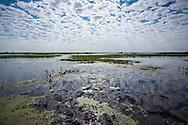 Lake Boeuf in Southern Louisiana.