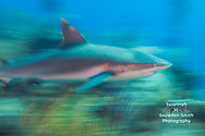 &quot;A Shark In Motion Tends To Stay In Motion&quot;<br />
