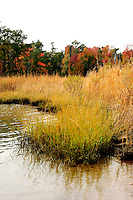 A marshland in the vicinity of the historical colony of  Jamestown Virginia.