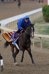 Breeder's Cup 2010 morning workouts at Churchill Donws Tuesday, Nov. 2, 2010.  Photo by Jonathan Palmer