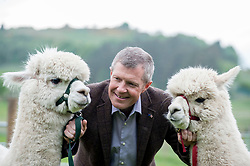 Scottish Lib Dem leader Willie Rennie gets more than he bargained for on a campaign visit to Bobcat Alpacas in the Pentland Hills outside Edinburgh.<br /> <br /> © Dave Johnston/ EEm