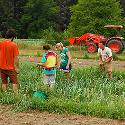 Farmhands work a field at the Crimson and Clover Farm in Northampton, Massachusetts.