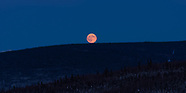 Alaska: Wolf Moon (Fairbanks: 10 Jan 20)