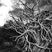 skeleton in black and white