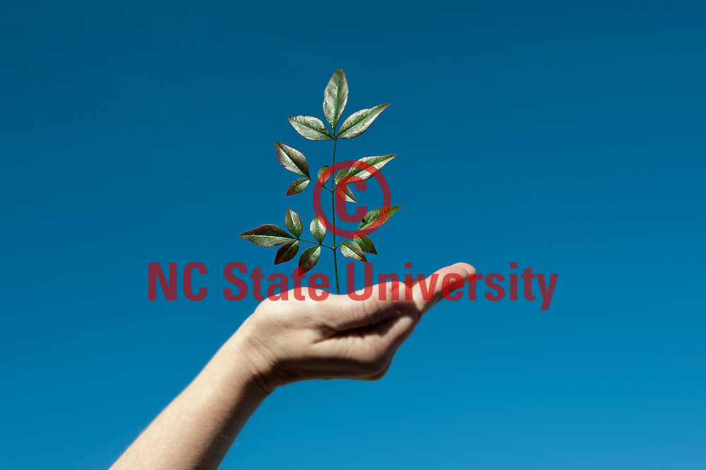 environment and natural resources, plant, leaf, hand, blue sky, earth, nature. Photo by Marc Hall