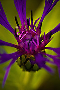 Flower macro resembling a synapse