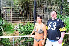 12-11-16 1:30 Tiger Swim