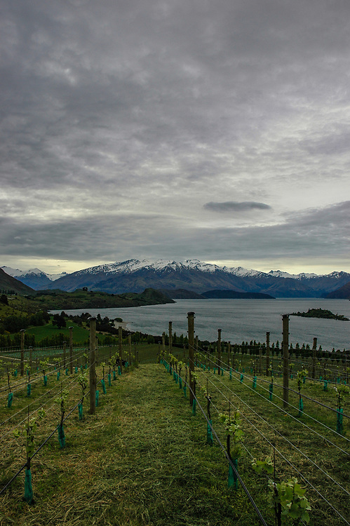 Rippon, biodynamic, Central Otago