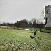 Nederland, Amsterdam , 6 februari 2011..Het buikslotermeerpark..anaf maandag7 februari 2011 starten de werkzaamheden voor de herinrichting van het Buikslotermeerpark. Hieronder worden de werkzaamheden toegelicht en wordt uitgelegd wat de gevolgen zijn voor de omwonenden en gebruikers van het gebied..Aannemer Jos Scholman Groen BV start met grond- en groenwerkzaamheden in het Buikslotermeerpark. De werkzaamheden hebben tot doel om de hoeveelheid open water te vergroten, zodat het watersysteem van de Buikslotermeer voldoende buffer heeft om 'droge voeten te houden'. Een ander doel is het verbeteren van de waterkwaliteit. Hiervoor wordt bijvoorbeeld een rietveld (helofytenveld) aangelegd om het water te zuiveren. Tevens komt er een pomp om het water te laten stromen en als fontein te lozen. Dogs and theis owners in a park in Amsterdam-North.