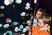 "The blubber jelly (scientific name: Catostylus mosaicus; Spanish: Medusa rolliza) comes in shades of blue, chalky white, or plum purple and ranges from Southeast Asia to Australia.  Exhibited at Monterey Bay Aquarium, California, USA. Although commonly named ""jellyfish,"" jellies are plankton, not fish. Jellies (class Scyphozoa) lack the backbone (vertebral column) found in fish. Jellyfish have roamed the seas for at least 500 million years, making them the oldest multi-organ animal. The Monterey Bay Aquarium (MBA) was founded in 1984 on the site of a former sardine cannery on Cannery Row along the Pacific Ocean shoreline. Fresh ocean water is circulated continuously from Monterey Bay, filtered for visibility during the day and unfiltered at night to bring in food. Monterey was the capital of Alta California from 1777 to 1846 under both Spain and Mexico. In 1846 the US flag was raised over the Customs House, and California was claimed for the United States."