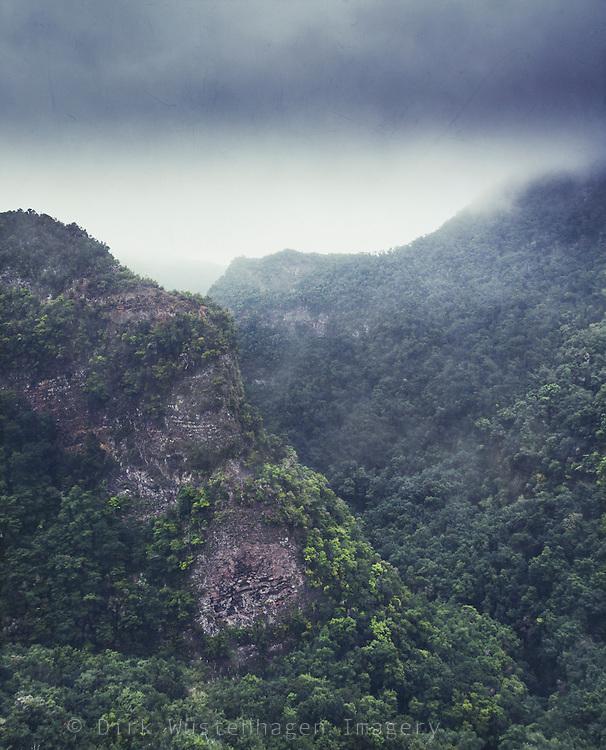 Blick auf die nebelverhangenden Lorbeerwälder (laurasilva)  Los Tiles auf La Palma, Kanarische Inseln, Spanien