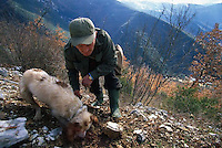 ca. March, 1999, near Norcia, Umbria, Italy --- Truffle Hunter and Dog Digging for Truffles --- Image by © Owen Franken/CORBIS