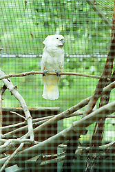 10 June 2001: Miller Park Zoo<br /> parrot<br /> Archive slide, negative and print scans.