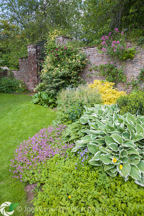 Hostas and a range of other herbaceous perennials in the garden at Acorn Bank Garden, Cumbria - photographed in June