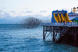 © Licensed to London News Pictures. 08/12/2017. Brighton, UK. Starlings murmuring at sunset over the Brighton Palace Pier today, 8th December 2017. Photo credit: Hugo Michiels/LNP
