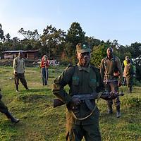 Gorillas, Bwindi