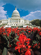 Exterior view of red fllowers and the United States Capitol building in  Washington, DC