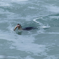seal & fish