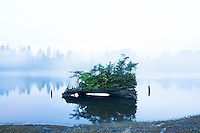 Scenic image of a nurse log in Nehalem Bay, OR
