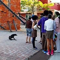 Central America, Cuba, Santa Clara. Students of the Santa Clara Arts School, Cuba.