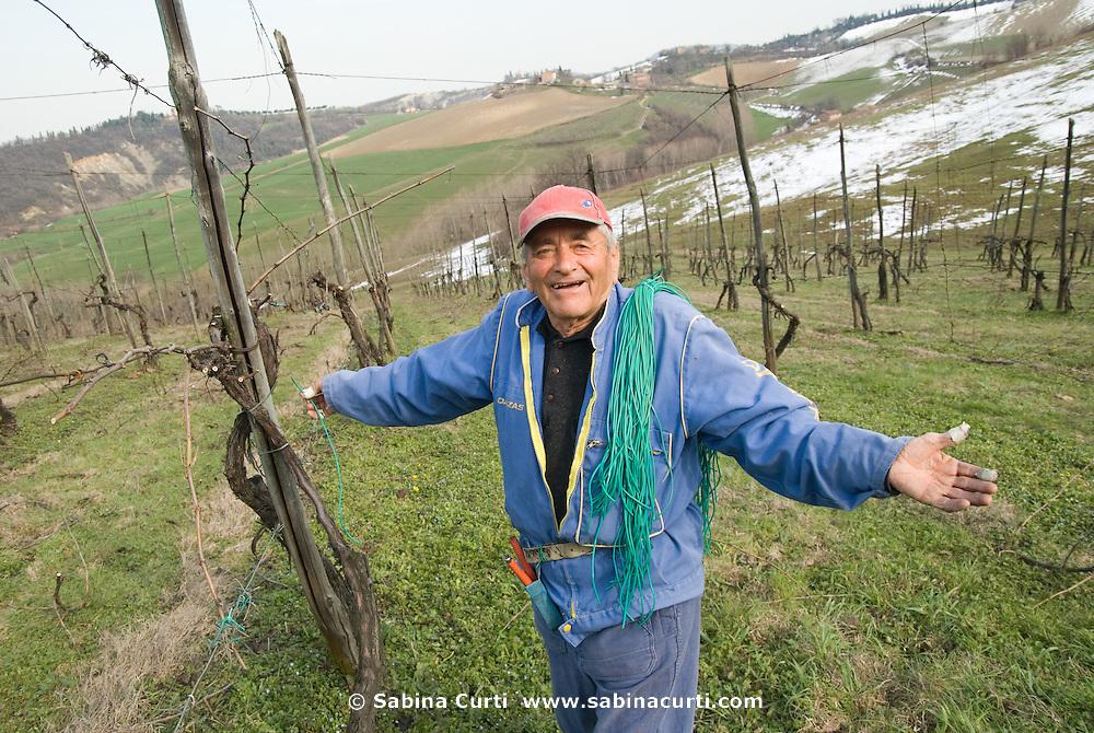 Vineyard, Emilia Romagna