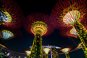 Garden Rhapsody Supertree light show, Gardens by the Bay, Singapore, Republic of Singapore