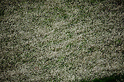 Jeceaba _ MG, Brasil...Planta tipica do cerrado em uma paisagem em Jeceaba...The typical vegetation of the Brazilian interior in the landscape in Jeceaba...Foto: JOAO MARCOS ROSA /  NITRO