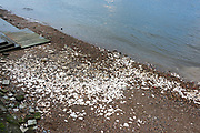 Chalk laid on the Thames riverbank in the 18th and 19th centuries to give a softer berth to barges at low tide, Greenwich, London.
