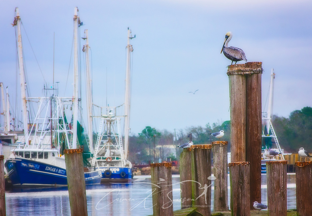 A brown pelican and seagulls perch on a wharf, January 20, 2017. The shrimp boats in the background are, from left, Edgar & Betty, and Seven Kids.