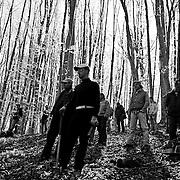 Italy, Basilicata- S. Francesco popular tree rite: waiting cut and crash of 2nd beech © 2012 Mama2