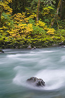 Autumn along the North Fork Nooksack River, North Cascades Washington