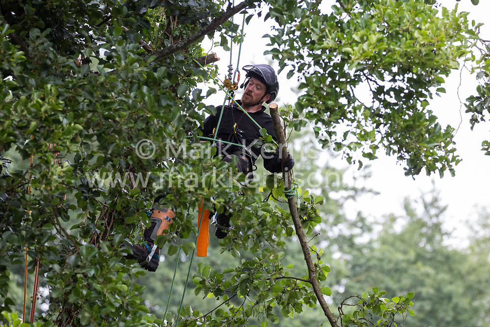 Denham, UK. 24 July, 2020. A tree surgeon working with the National Eviction Team removes branches from an ancient alder tree prior to its felling in connection with works for the HS2 high-speed rail link in Denham Country Park. A large policing operation involving the Metropolitan Police, Thames Valley Police, City of London Police and Hampshire Police as well as the National Eviction Team was put in place to enable HS2 to remove the tree. 2020 is the Year of the Tree.