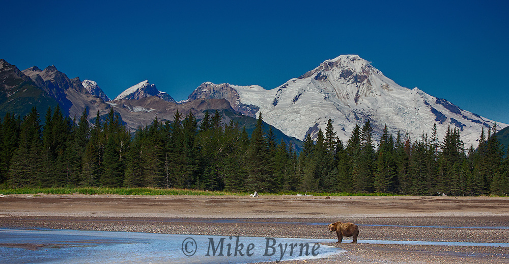 Bear photography at Lake Clark National Park, Alaska