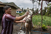 A farmer washes his horse after renting it to tourists in Bromo sand dunes, East Java, 2017.