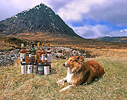 Sheltie & Whisky Bottles