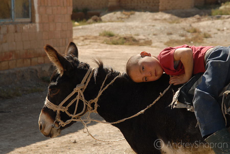 A portrait of a Kyrgyz boy and a donkey