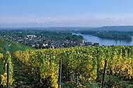 DEU, Germany, Rheingau, Ruedesheim at the river Rhine, view to the city, wine-growing.....DEU, Deutschland, Rheingau, Ruedesheim am Rhein, Blick auf die Stadt, Weinanbau.........